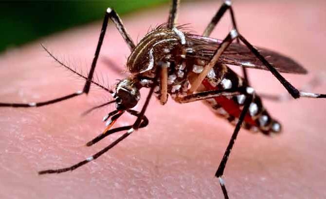 Zika vírus e a Paralisia Facial